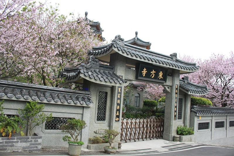 17度C在地景點春季推薦-東方室-櫻花 (6)