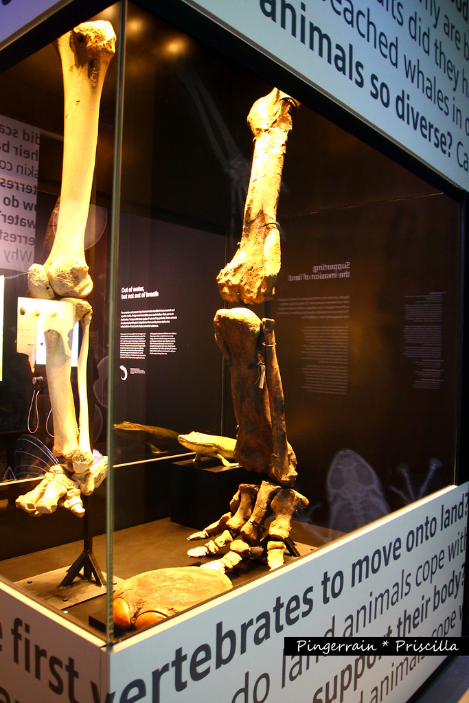 Triceratops Leg (the one on the right)