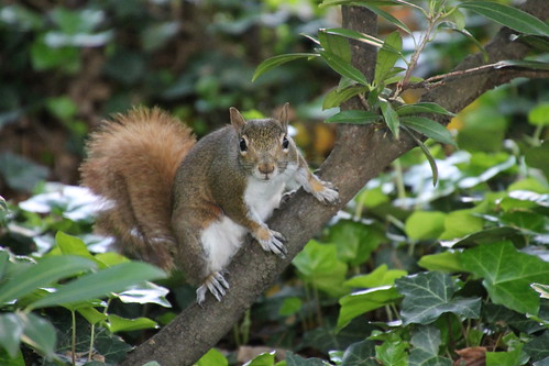 Squirrels at Vanderbilt University (Nashville, Tennessee) - April 20-23, 2015
