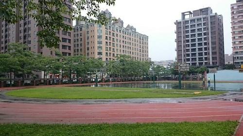 跑道環繞著木棉樹。圖片來源:劉慧玲