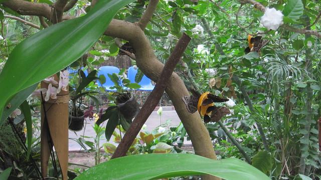 SchmetterlingsfarmEssen (1)