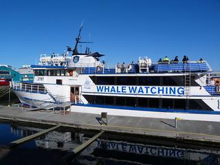 Whatle Watching en Reykjavík (Islandia)