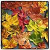 Un arbol de verbos #languages #spanish #autumn