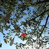 #LCDJ #lecieldujour  On a fêté nos retrouvailles... 25 ballons colorés telles les années déjà passées:  elle est belle...