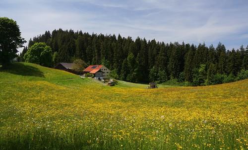 Hirschberg - Ahornach 2