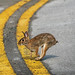 Photo finish bunny, going for the gold. by Jamie Felton Photo