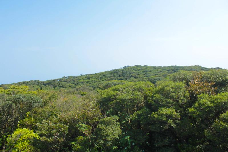 20140531-開聞岳-0404.jpg