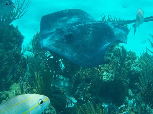 underwater27 stingray snorkel