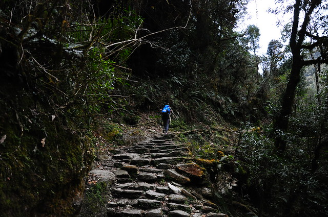 Pooh hill trekking - Joukje 4 - via TinyBlackBird.com