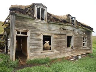 Abandoned - Bergstaðir  /  Eyðibýli / Ruine