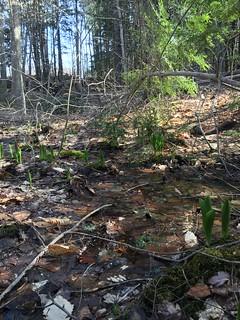 Spring plants take advantage of ephemeral water