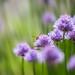 Peeking by Elizabeth_211
