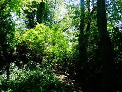 Morgan Days Park - Smith Pond (7)