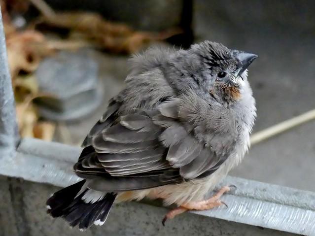 tiny little bird (explored)