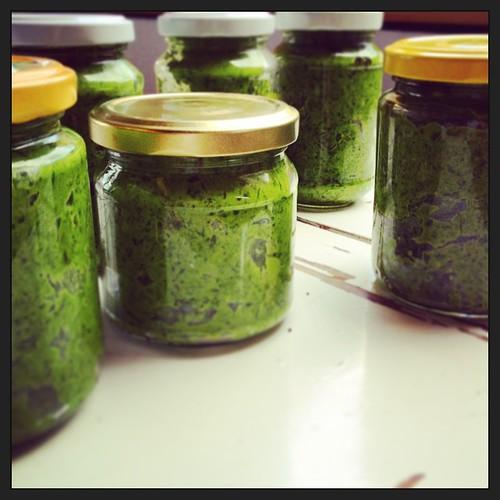 selbst gepflückt & verarbeitet #bärlauch #pesto #diy #simplefood #spring #frühling