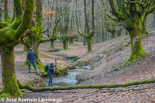 Hayedo de Otzarreta . Parque Natural de Gorbeia 2015 #DePaseoConLarri #Flickr -062