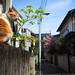 Alley Cat #263 by JIMALOG