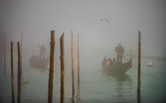Heavy Venice