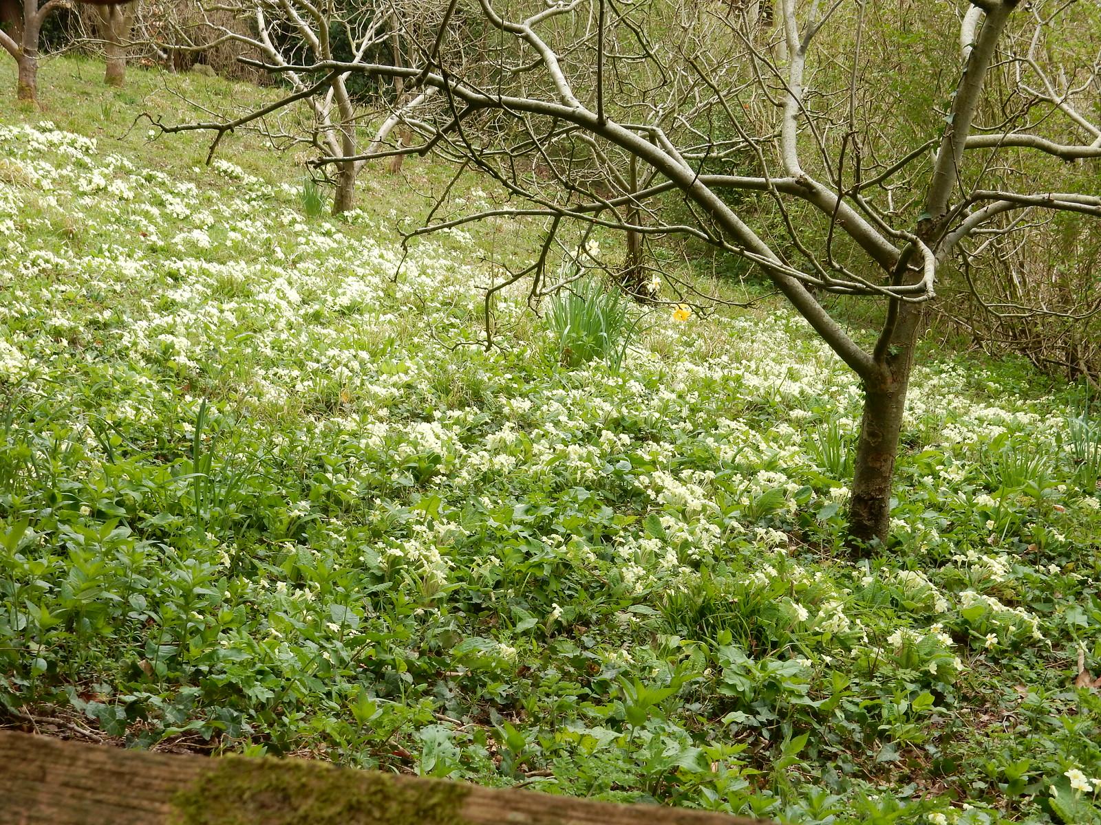 Primroses Sevenoaks Circular