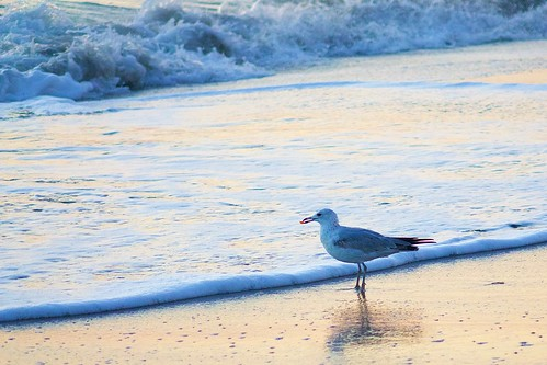 ocean beach sunrise dawn florida seagull indialantic