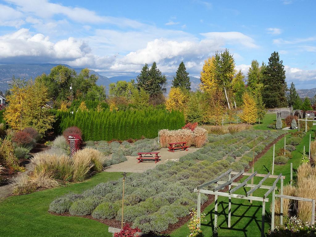 BC lavender farm