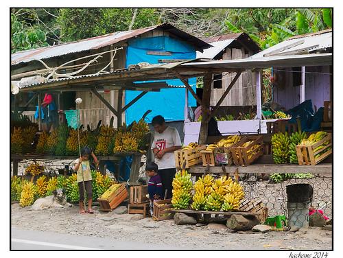 voyage fruits architecture banane vegetal batimentcommercial
