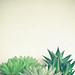 Succulent Forest by _cassia_
