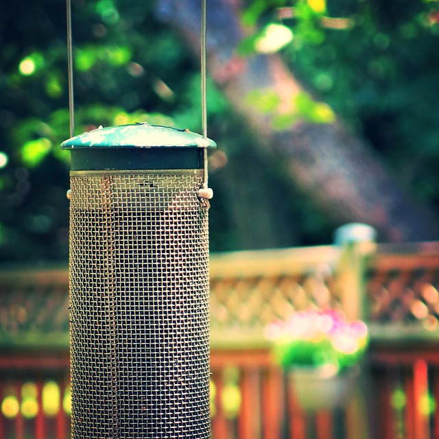 backyard feeder ~ HBW!