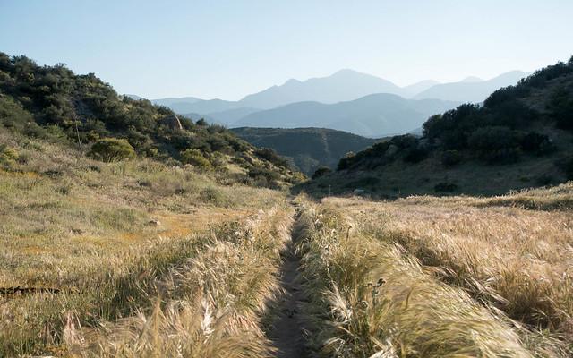 Plush grasses, m340
