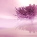 _Dream in pink_ by SalvyItaly