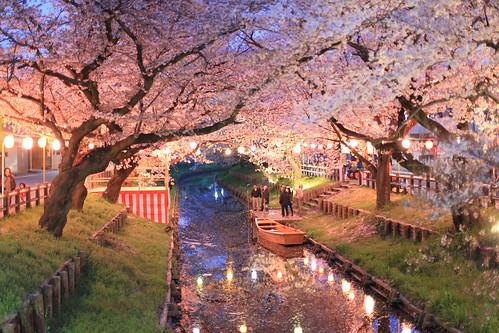 KAWAGOE sakura さくら