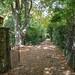 Visiting Mawarra: An Edna Walling Garden by kathiemt1