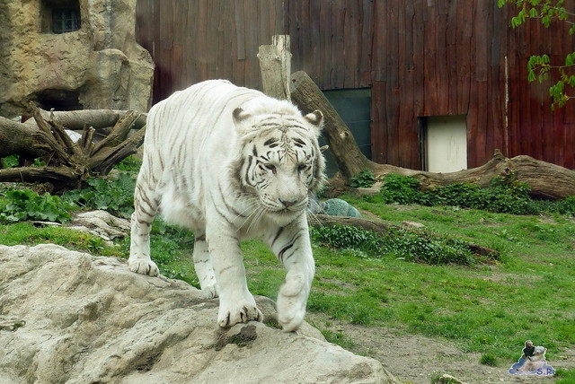 Zoo Bratislava 18.04.2015 33