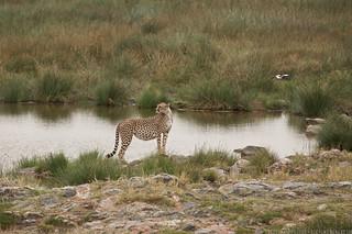 2014-07-20 @serengeti 5619