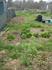 Allotment April 5th
