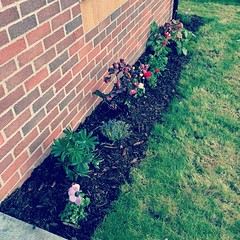 Tonight's project - flower bed at front of house. :white_check_mark: