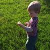 Harvesting dandelions  #NoFilter