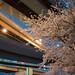 Overpasses and cherry blossom (江北ジャンクションと桜)
