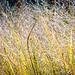 GrassGlitter.jpg by Klaus Ressmann