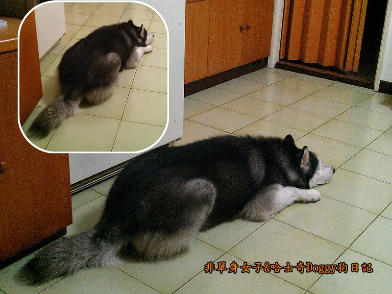 Doggy貪吃狗3廚房等2