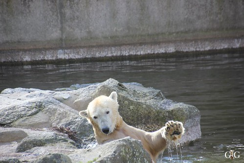 Oster-Montag im Zoo Berlin 06.04.201523
