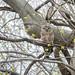 115: Sleepy Owl by JKLsemi