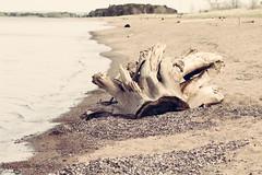 Stump, Park Point