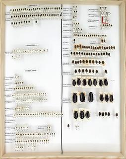 Gösta Gillerfors, non-Nordic Coleoptera