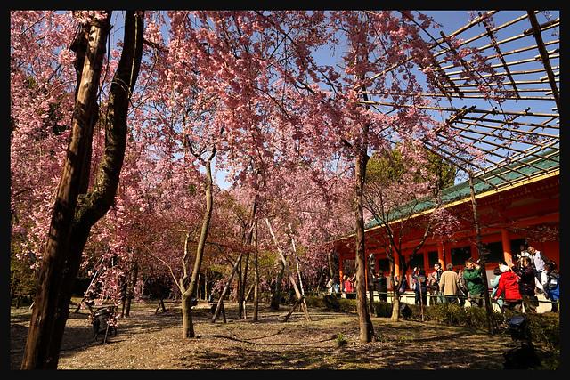 日本京都_東山区 平安神宮.05