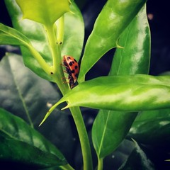 #HappyWednesday #EarthDay #2015 #Ladybug #ValleyRanch #Texas