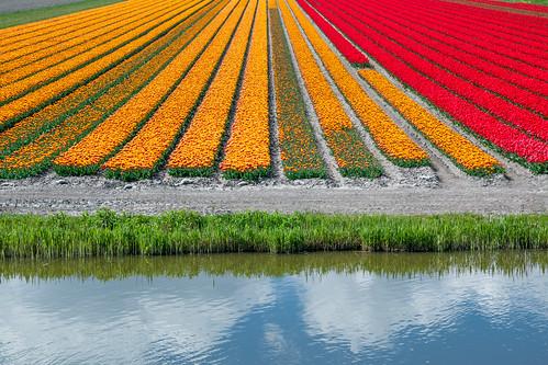 holland netherlands tulips nederland tulip img1716 ursem