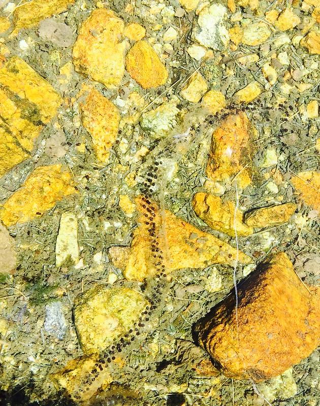 Peñalara. Alpino. Artrópodos, anfibios y reptiles 17560514950_6e1457b669_c