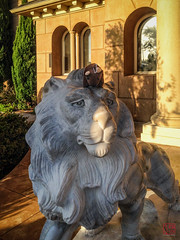Buddy Rides the Lion