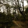 Forêt de Yakouren
